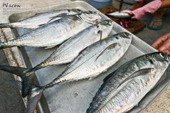 小琉球美食 - 穿著厚厚鐵甲的冬季私房料理!